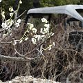梅と自然に帰る車