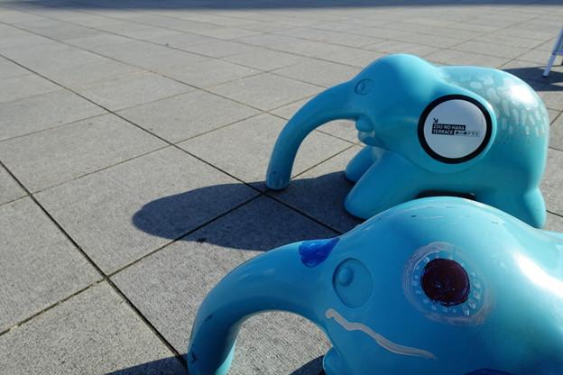 Photos: 象の鼻