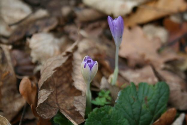 写真: 12月の春を見つけた!