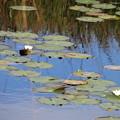 池塘に映る青い空