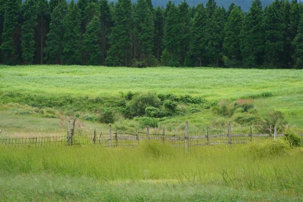 九州 久住高原9月