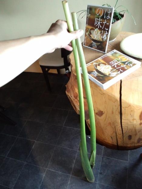沖縄民はみんな知ってる!?田芋(水芋)の栄養や料理とは?