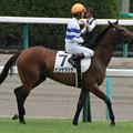 写真: ヒシサブリナ 返し馬(13/09/08・新馬戦)