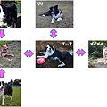 写真: 相関図2-1