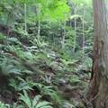 Photos: 御嶽山の裾野に広がる油木美林