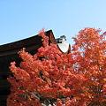 京都2007.天竜寺5