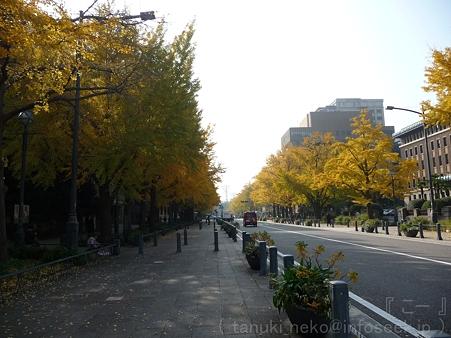 111130-横浜 紅葉 日本大通り (14)