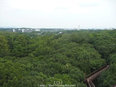 150829-万博公園 (25)