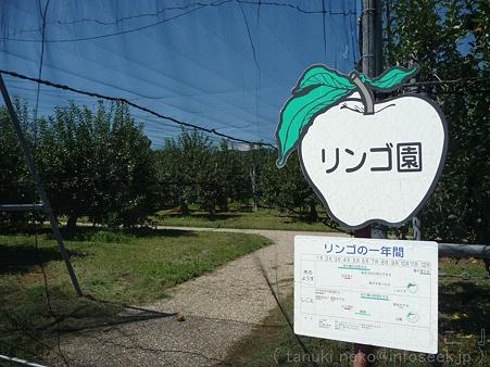 110906-浜松フルーツパーク リンゴ (1)