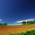 Photos: 赤麦の丘