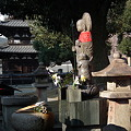 Photos: 興福寺三重塔付近20111229