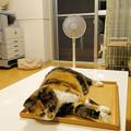 Photos: 猫転送装置