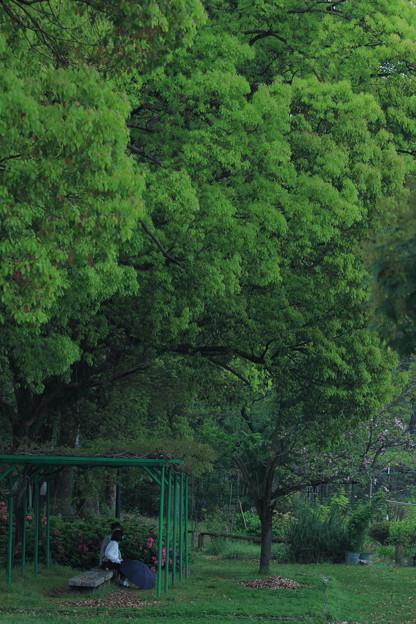 第一回川柳大会 大きな樹の下で