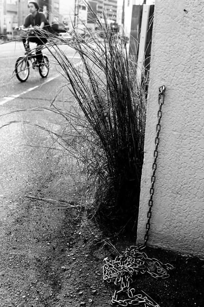 路傍の草8