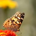 Photos: 花のうえで