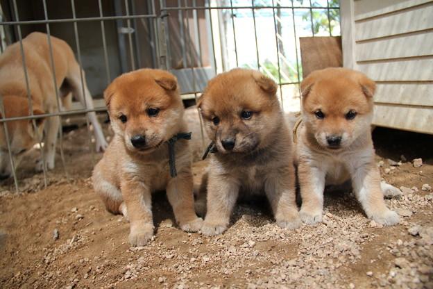 Photos: 子犬3兄弟