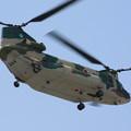 Photos: CH-47J 67-4496 入間ヘリコプター空輸隊 IMG_1646_2