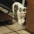 隅を歩く猫ちゃん  1
