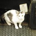 隅を歩く猫ちゃん  2