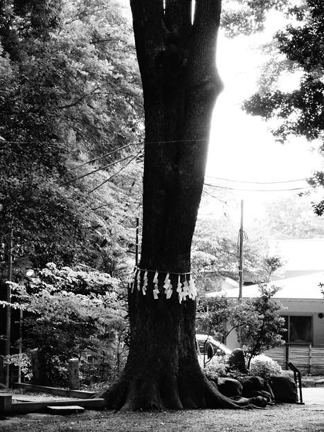 代々木八幡宮 (渋谷区代々木)