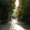 Photos: 参道-神明社 (横浜市保土ケ谷区神戸町 107)