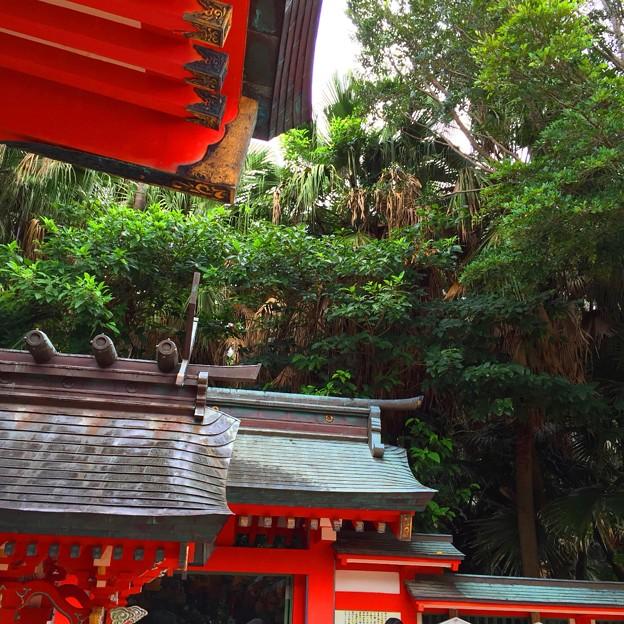8月_青島神社 2