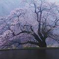 Photos: 春雨曇る駒つなぎ