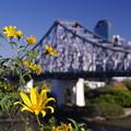 Photos: Story bridge