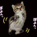 Photos: ぽっこりお腹の赤ちゃんちゃこ