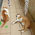 Photos: まったりくつろぐ親子