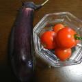 家庭菜園 なすび トマト