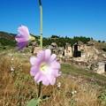 マルティリウムと花  Martyrium & flowers