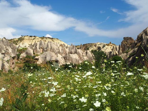 童は見たり、谷中の花 Wild Flowers in Rose Valley