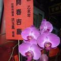 春節の献花 Offered flowers at Chinese New Year