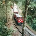 阿里山森林鉄道 The train on the Zhushan Line