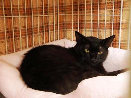 他猫のベッドでくつろぐMJ