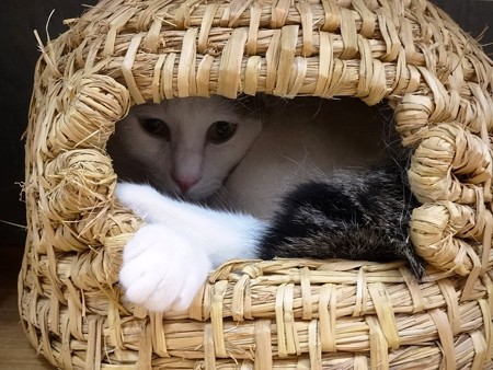 オラフ「手作り猫ちぐらなんだけど、ボクにはちょっと狭いんだ」