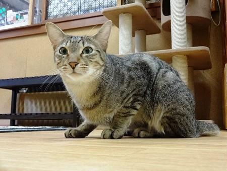 マサキ「まぢか!!」