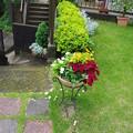 写真: 庭の様子1