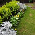 写真: 庭の様子2