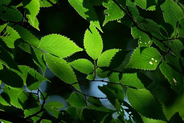 2015.07.21 追分市民の森 木漏れ日