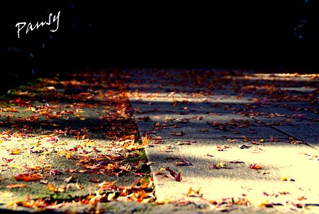 落ち葉の参道・・
