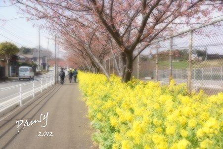 桜と・・菜の花の径・・
