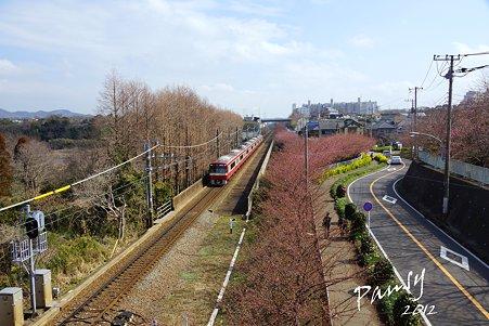 京急と・・桜の道・・