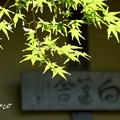 Photos: 東慶寺~水無月-260