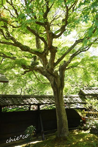 東慶寺~水無月-296