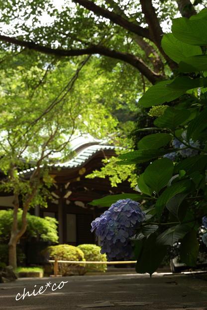 鎌倉-393