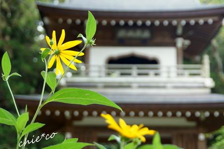 浄智寺-195
