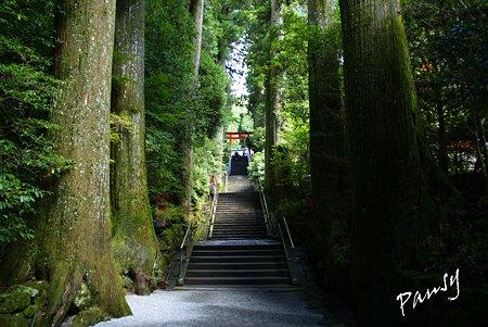 大杉に守られて・・箱根神社・・6