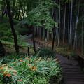 Photos: 竹林への径